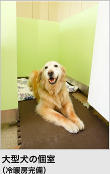 大型犬の個室